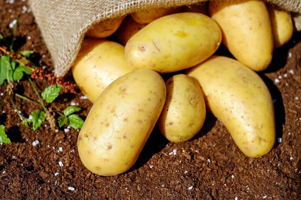 Kartoffel Ernte Mietkälte