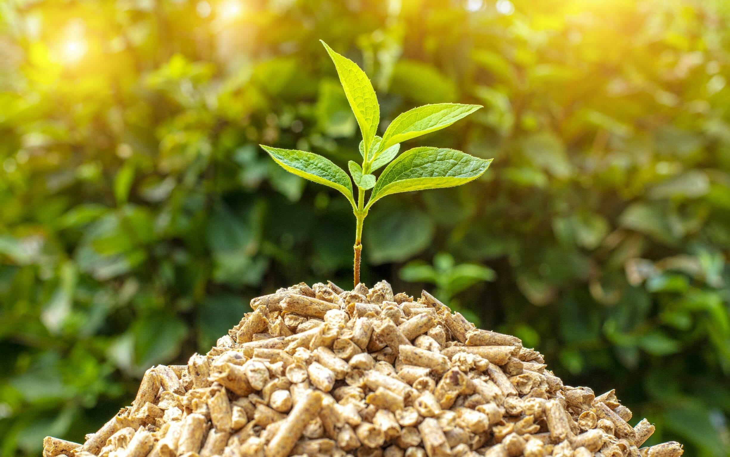 Pellets mit Pflanze für mobile Pelletheizung